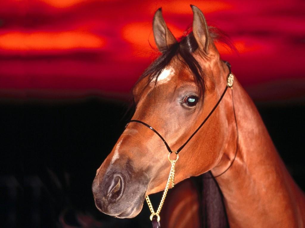 Prancing Horse 2